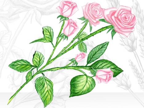 Illustration roses dessin crayons